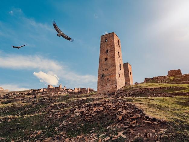ワシは夕方の光の中でダゲスタンのアウルゴーストグーアの廃墟と塔の上を飛ぶ。ロシア。