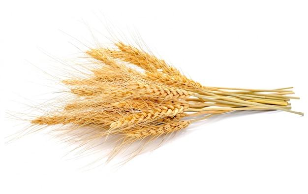 Ear of barley on white