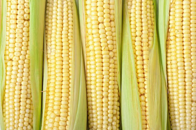 An ear of corn isolated on white