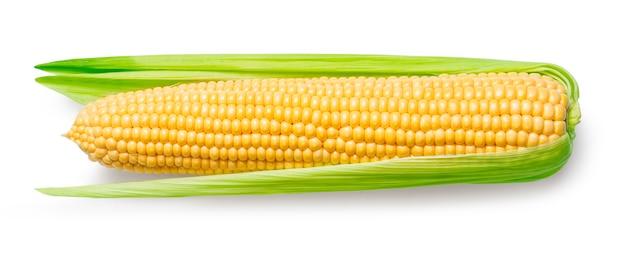 白で隔離されるトウモロコシの耳