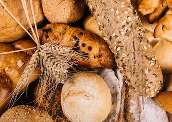 Ear of wheat on whole grain loaves of different bread