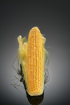 Ear of ripe corn isolated on dark background with reflection of the cob. useful food or production for animal husbandry and eco fuel