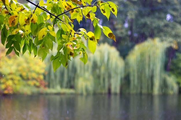 都市公園の初秋。湖の上に雨が降っています、水の上で枝を濡らしてください
