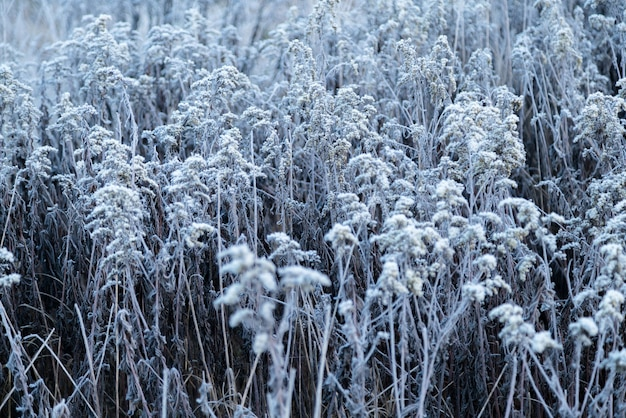 Early morning frozen hoarfrost grass in early autumn morning.