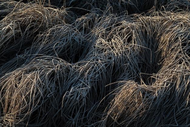 秋の早朝の凍った霜草。