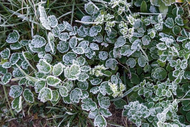 Рано утром замерзшая трава из инея ранним осенним утром