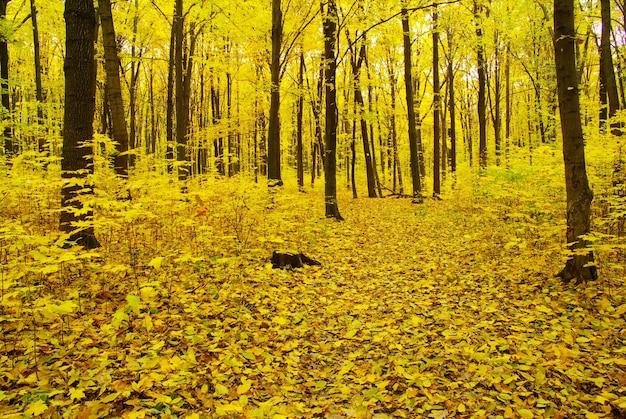 Раннее утреннее солнце в осеннем лесу