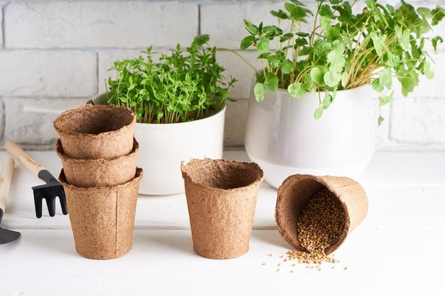 Ранняя рассада, выращенная из семян в ящиках на подоконнике с садовыми инструментами