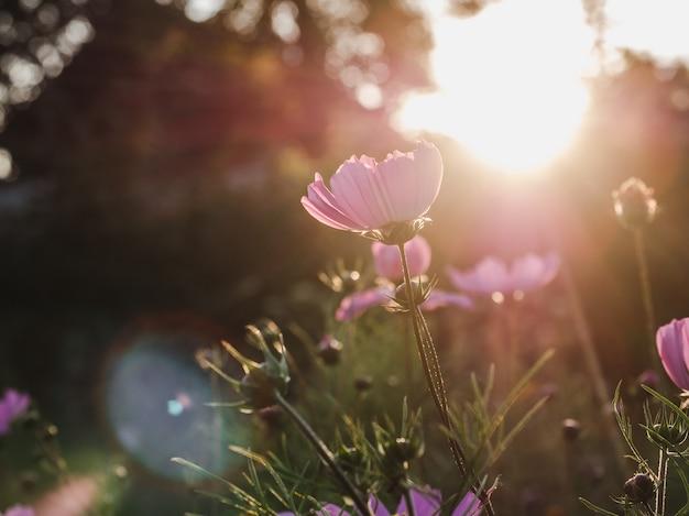 잔디에 이른 봄 꽃