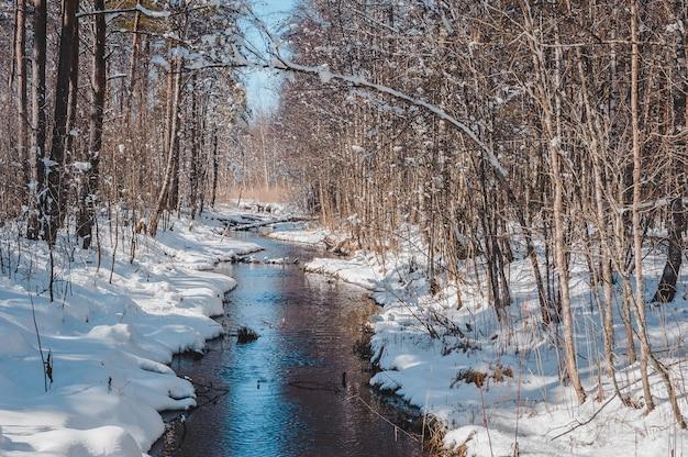 Ранней весной лес у речки похож на аллею ручей петляет в лесу