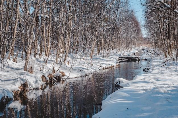 Ранневесенний лес у речки. ручей вьется в лесной пейзаж.