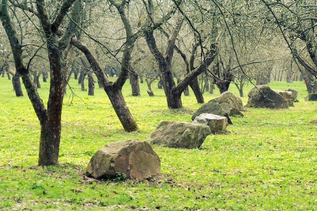 リンゴの木の庭の早春