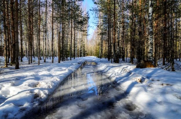 Ранняя весна в русском лесу