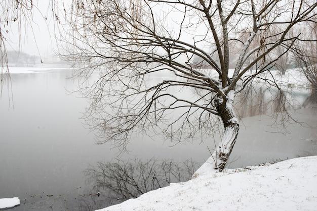 川岸に柳の木がある初冬の風景