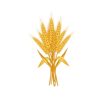 白い背景で隔離の小麦の耳と穀物