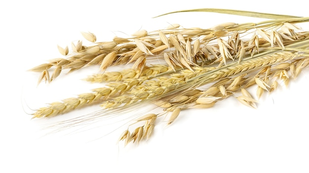 Ears of oats, barley and wheat bunch isolated on white background. ears of cereals.