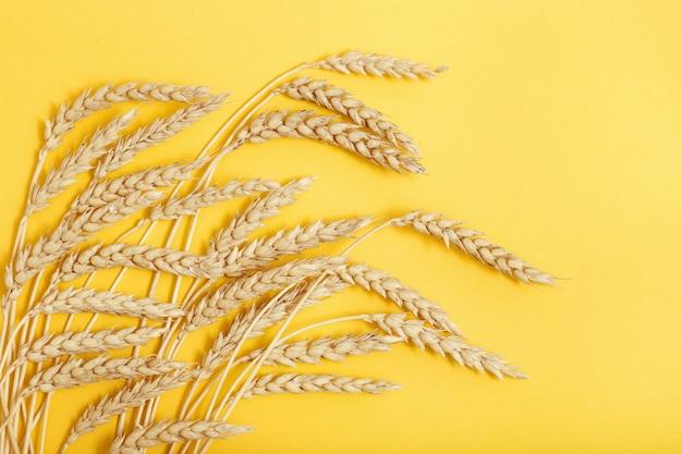 熟した小麦の穂熟した穂と黄色の背景がクローズアップ秋の収穫時期の概念