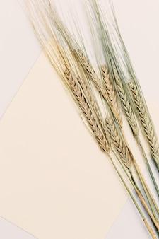 ライ麦の穂はベージュの背景にクローズアップ。天然穀物植物、収穫時期の概念。フラットレイ