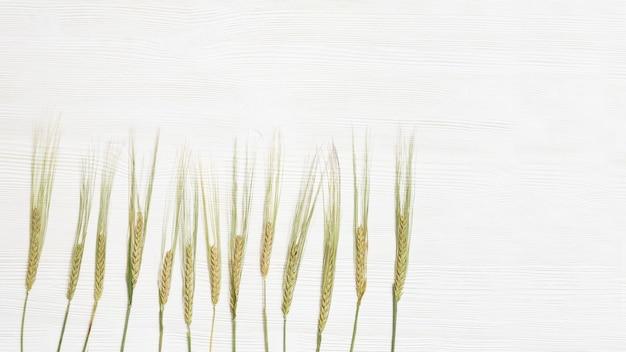 ライ麦の穂は白い木の背景にクローズアップ収穫時間の概念穀物作物