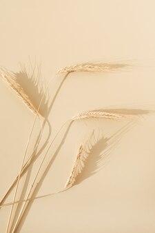 パステルベージュの表面にライ麦、小麦の穂
