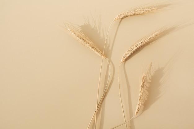 ライ麦の穂、パステルベージュの小麦