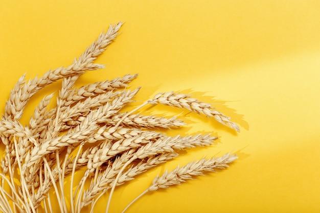 햇빛의 그림자가 있는 노란색 종이 배경에 밀과 곡물의 귀