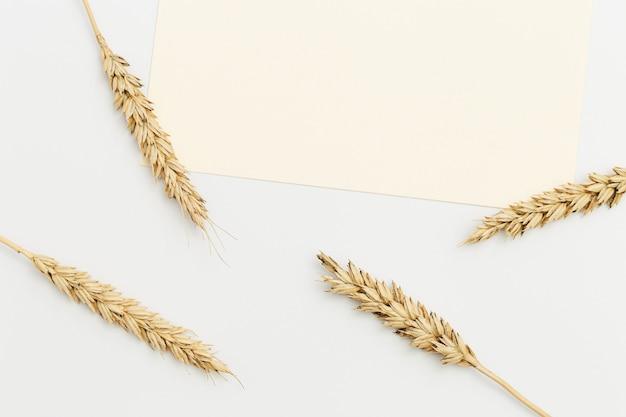 小麦の穂はベージュの背景にクローズアップ。天然穀物植物、収穫時期の概念。フラットレイ