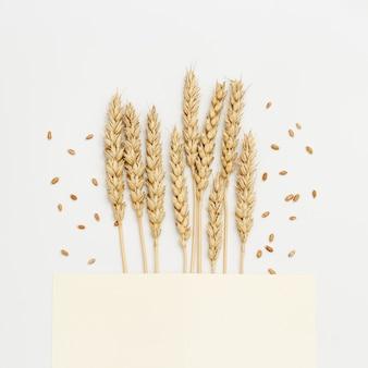 小麦の穂はベージュの背景にクローズアップ