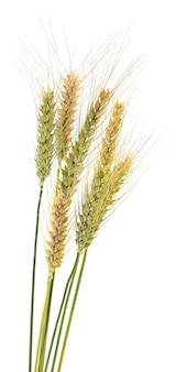 分離された小麦の穂
