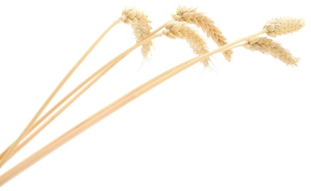 白地に小麦の穂