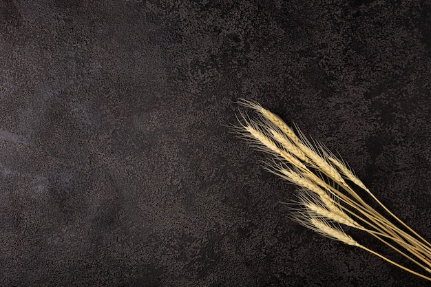 Ears of wheat on black background texture. copyspace. top view