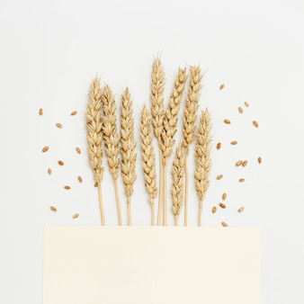 Ears of wheat close up on beige background