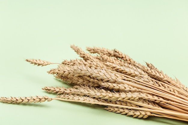 Ears of wheat close up on pastel green background natural cereal plant harvest time concept
