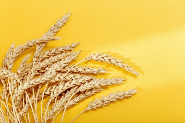 Ears of wheat and grains on yellow colored paper background  with shadows from sunlight