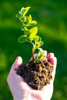 Earth day. sapling of a tree in a female hand on a background of grass. forest conservation concept. world environment day.