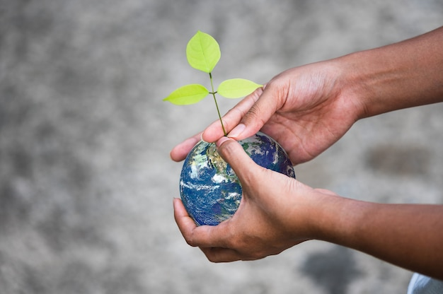 Earth globe ball and growing tree in human hands