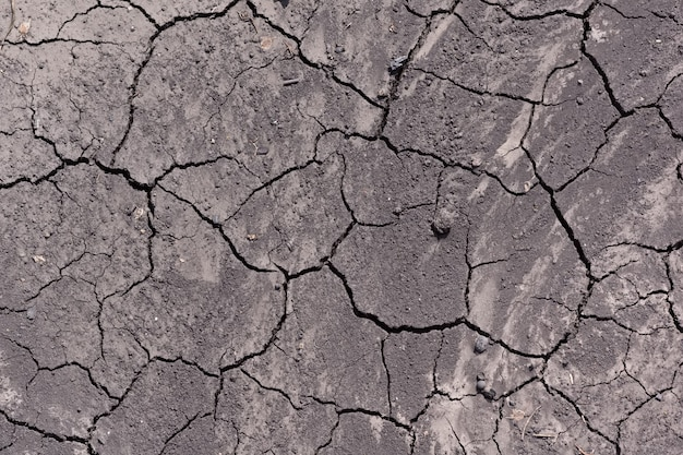 The earth is covered with large cracks from lack of moisture and drought