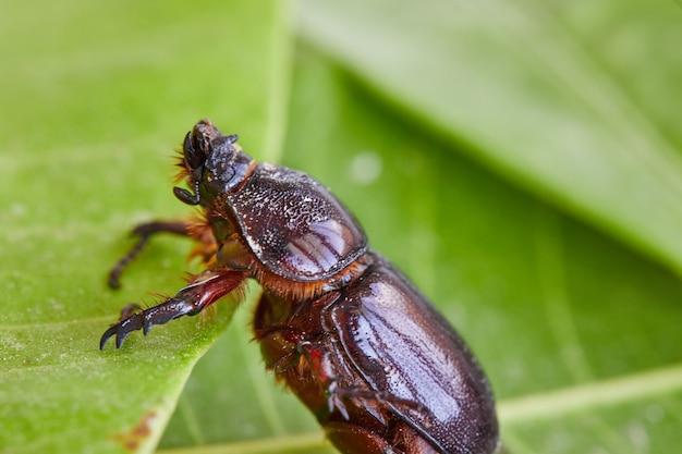 밝고 화창한 날에 녹색 잎 클로즈업에 흙 똥 딱정벌레