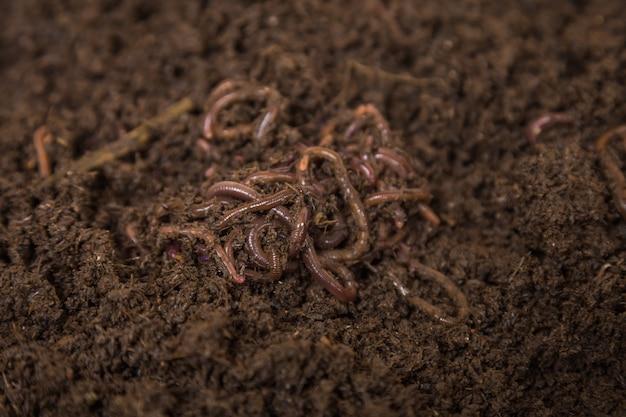 토양에 좋은 지렁이 농장