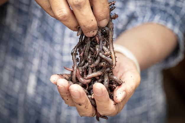 Earthworm on women hand