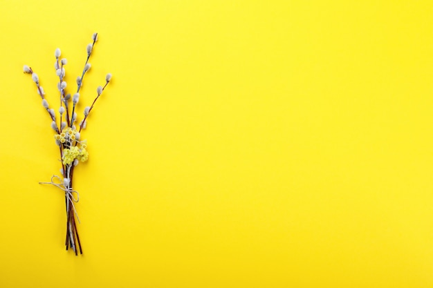 Easter background. bouquet of willows on a yellow paper