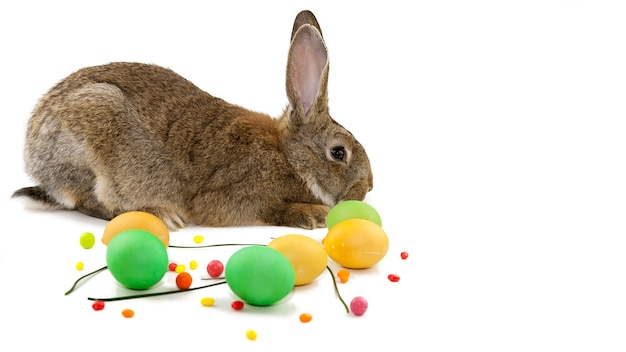 Easter background, gray easter bunny on the background of multicolored