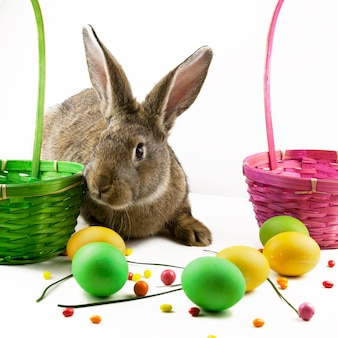 Easter background, gray easter bunny