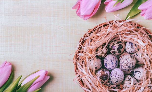 Easter background pink tulips on wooden table quail eggs nest