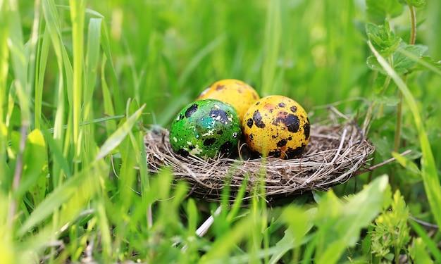 풀밭에 계란을 칠한 둥지가 있는 부활절 배경