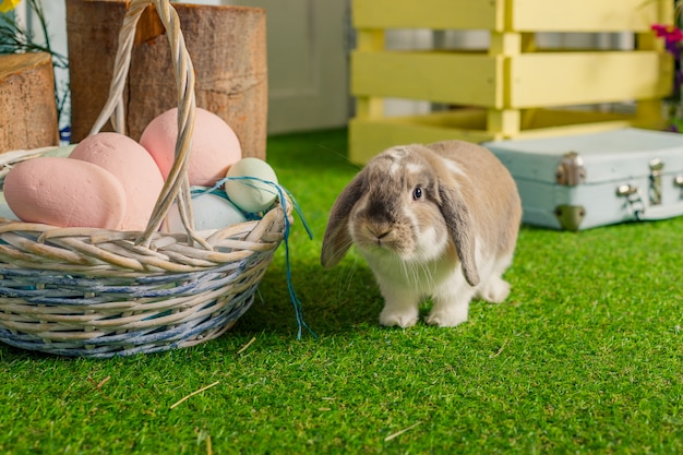 Easter bunny on a beautiful spring meadow, decoration, basket with easter eggs..rabbit ram breed,funny lop eared satin rabbit .basket of colored eggs