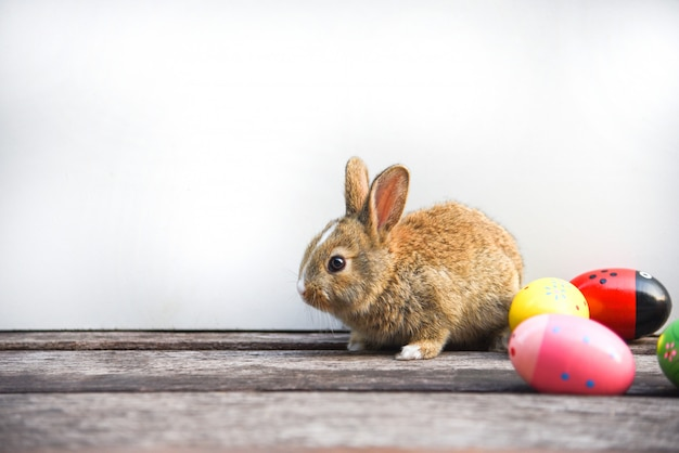 Easter bunny and easter eggs on gray background
