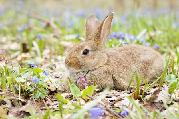 Easter bunny on a flowering meadow. hare in a clearing of blue flowers.