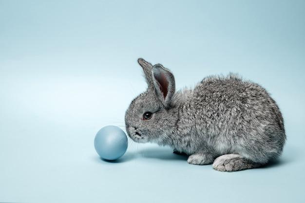 Coniglio di coniglietto di pasqua con uovo dipinto di blu sull'azzurro