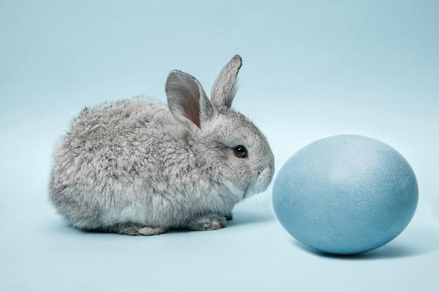 Пасхальный заяц кролик с синим расписным яйцом на синей стене